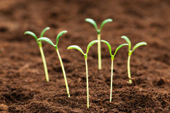 Green seedling- concept of new life Stock Photos