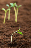 Green seedling - concept of new life Stock Photo