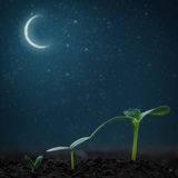 Green seedling growing. On the backgrounds moon and stars. Elements of this image furnished by NASA Royalty Free Stock Photos