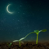 Green seedling growing. On the backgrounds moon and stars. Elements of this image furnished by NASA Stock Photo