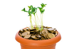 Green seedling growing from the coins Royalty Free Stock Photography
