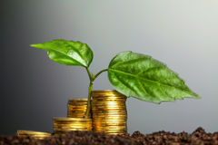 Green seedling growing from coins in the soil. The concept of mo Royalty Free Stock Photos