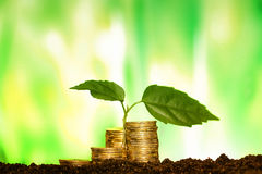 Green seedling growing from coins in the soil. The concept of mo Stock Photos