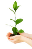 Green seedling in hand Stock Photo