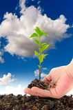 Green seedling in hand Royalty Free Stock Photos
