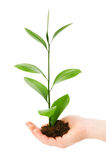 Green seedling in hand Stock Images