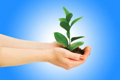 Green seedling in hand isolated Stock Photo