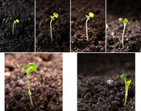 Green seedling illustrating concept of new life Royalty Free Stock Photo