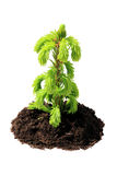 Green seedling isolated Royalty Free Stock Image