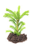 Green seedling isolated Royalty Free Stock Photos