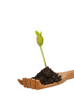Green seedling plant in wooden hand Royalty Free Stock Image