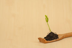 Green seedling plant in wooden hand Royalty Free Stock Photos