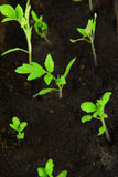 Green seedling Stock Photography
