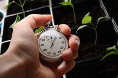 Green seedling and stopwatch Royalty Free Stock Photos