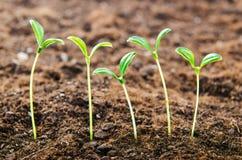 Green seedlings stock photo
