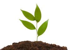 Green seedlings Stock Images