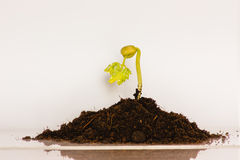 Green seedlings with concept Royalty Free Stock Images