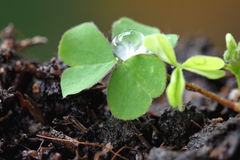 Green seedlings. Royalty Free Stock Images