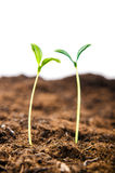 Green seedlings in new life Royalty Free Stock Images