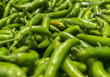 Green serrano pepper Royalty Free Stock Images