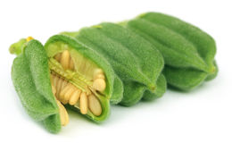 Green sesame pods Stock Image