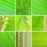 Green set Royalty Free Stock Photography