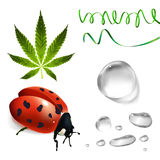 Green set. Cannabis, ladybug, transparent water drops Royalty Free Stock Images