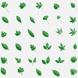Green set of 35 leavs icons isolated on background. Modern flat pictogram concept. Trendy Simple ve. Ctor symbol for web site design or button to mobile app Stock Photography