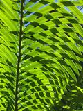 Green shade. Green leafy shade royalty free stock image