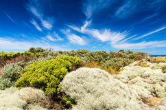 Green shades vegetation and blue sky Royalty Free Stock Photography