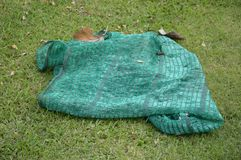 Green shading net Royalty Free Stock Photo