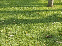Green shadow lawn Stock Images