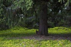 Green shadows Royalty Free Stock Image