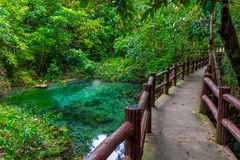 green shady jungles of Thailand, a national park Stock Photo