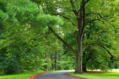 Green and shady park drive Royalty Free Stock Images