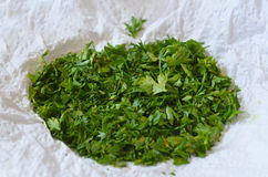 Green shallot coriander Royalty Free Stock Image