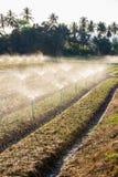 Green Shallot farm Royalty Free Stock Photo