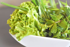 Green shallot, lettuce and  peppermint Stock Photography