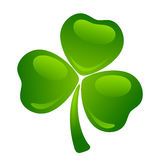 Green shamrock. Stock Images