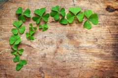 Green leaves on wooden background. Green shamrock leaves on wooden background Royalty Free Stock Image