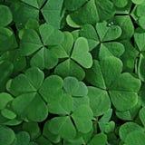 Green shamrock texture Royalty Free Stock Photo