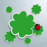 3 Green Shamrocks. Green shmarocks on the grey background. Eps 10  file Stock Images