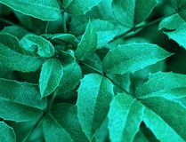 Green sharp leaf Stock Photos