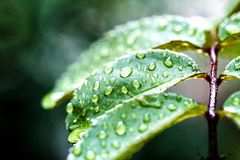Green sheet background with raindrops stock images
