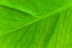 Green sheet background.shallow dof Royalty Free Stock Photos