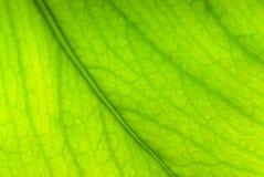 Green sheet background.shallow dof Stock Images