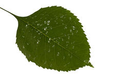 Green sheet. Drop Climate Tropical Color Water Freshness Flora Spring Rain Drops stock illustration