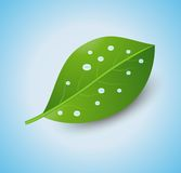 Green sheet with drops of water on a blue backgrou. Nd,    illustration Royalty Free Stock Photo