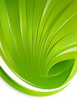 Green Shell Stock Images