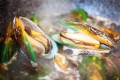 Cooking green shell mussels Royalty Free Stock Photos